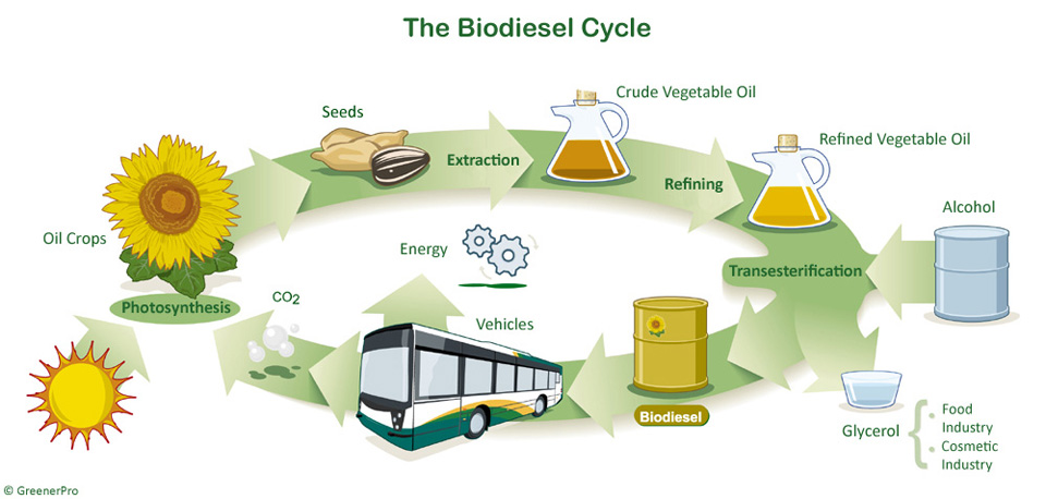 biofuels are likely to make an Conventional biofuels are likely to produce between 37 and 66% of the energy needed in road and rail transport, while advanced biofuels could meet up to 43% of the uk's renewable transport fuel target by 2020.