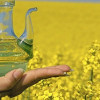 About The Rapeseed Oil Market