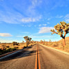 Enjoy The Drive - Joshua Trees National Park